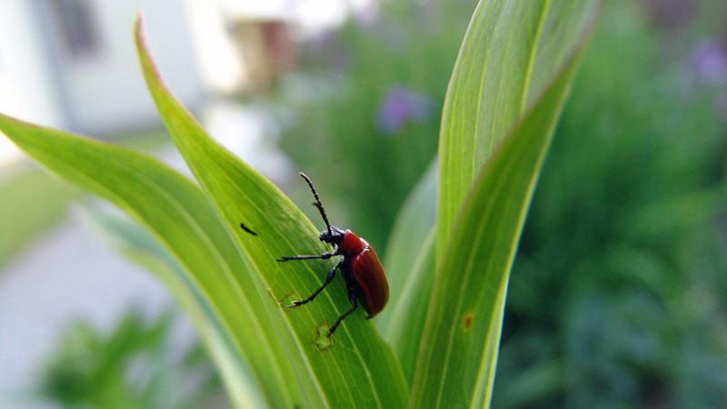 Kwiaty w ogrodzie – problemy z chorobami i szkodnikami