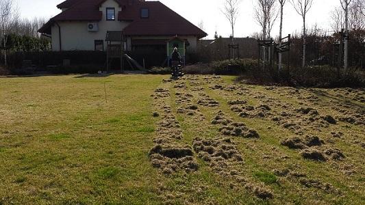 Wertykulacja trawnika, aeracja trawnika – zabiegi