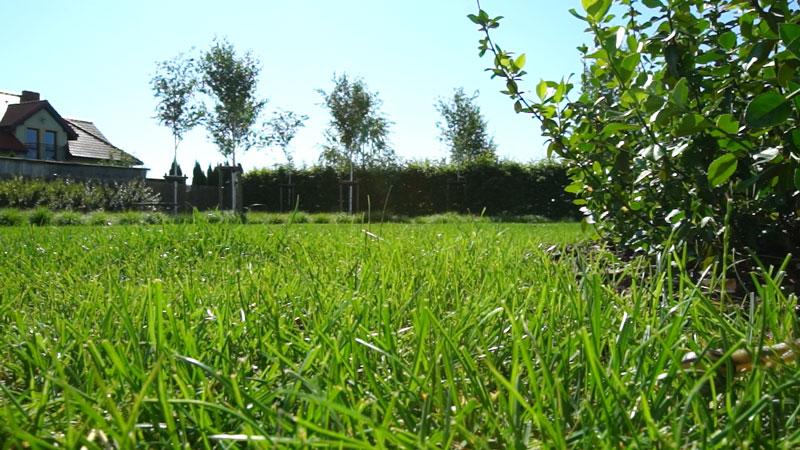 Trawnik z rolki czy z siewu? Jak założyć trawnik?