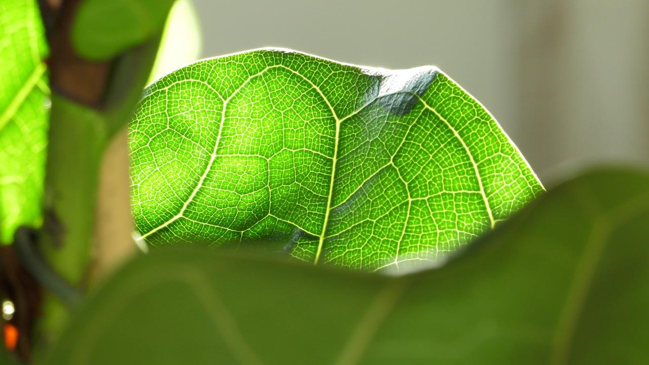 Światło – miejsce dla roślin domowych