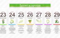 Kalendarz ogrodnika na 23.07 – 29.07 – lipiec w ogrodzie
