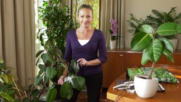 Rozmnażanie roślin przez odkłady powietrzne