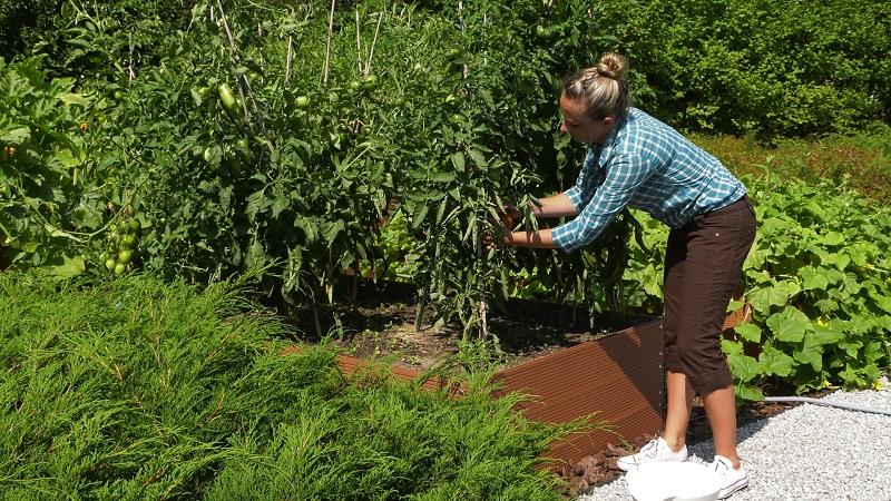 Ogród warzywny w marcu – rozsady papryki i pomidorów