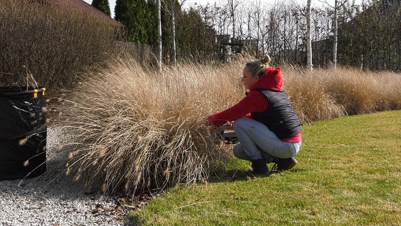 Trawy ozdobne – cięcie