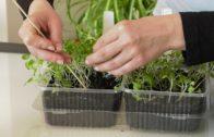 Wysiew w kwietniu – ogród warzywny