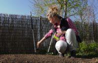 Ogród warzywny w kwietniu