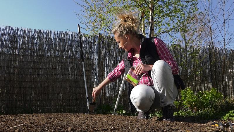 ogród warzywny w kwietniu, uprawa warzyw, własne warzywa, brokuł, kalafior, kapusta, buraki