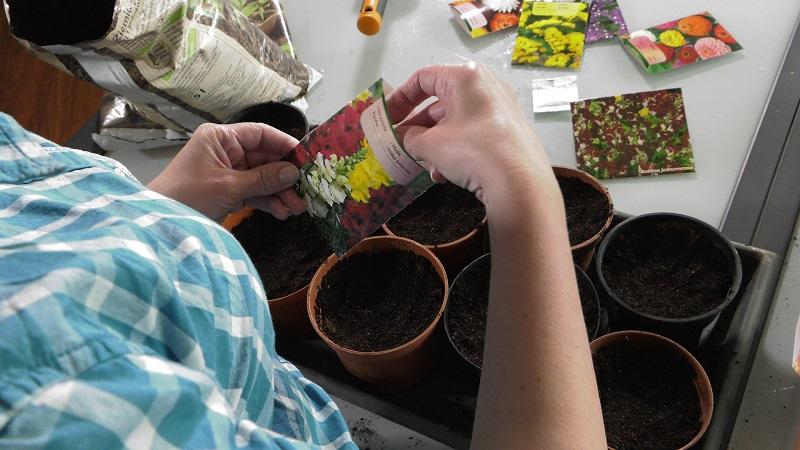 kwiaty jednoroczne, aksamitki, cynie, złocienie, astry, kocanki, zatrwiany, floksy, kleoma, wysiew kwiatów