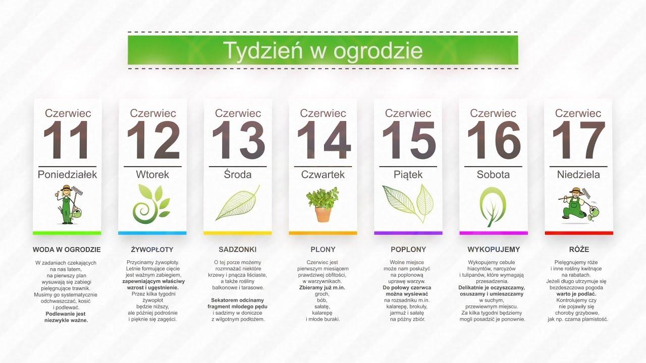 Kalendarz ogrodnika na 11.06 – 17.06 – czerwiec w ogrodzie