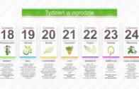 Kalendarz ogrodnika na 18.06 – 24.06 – czerwiec w ogrodzie