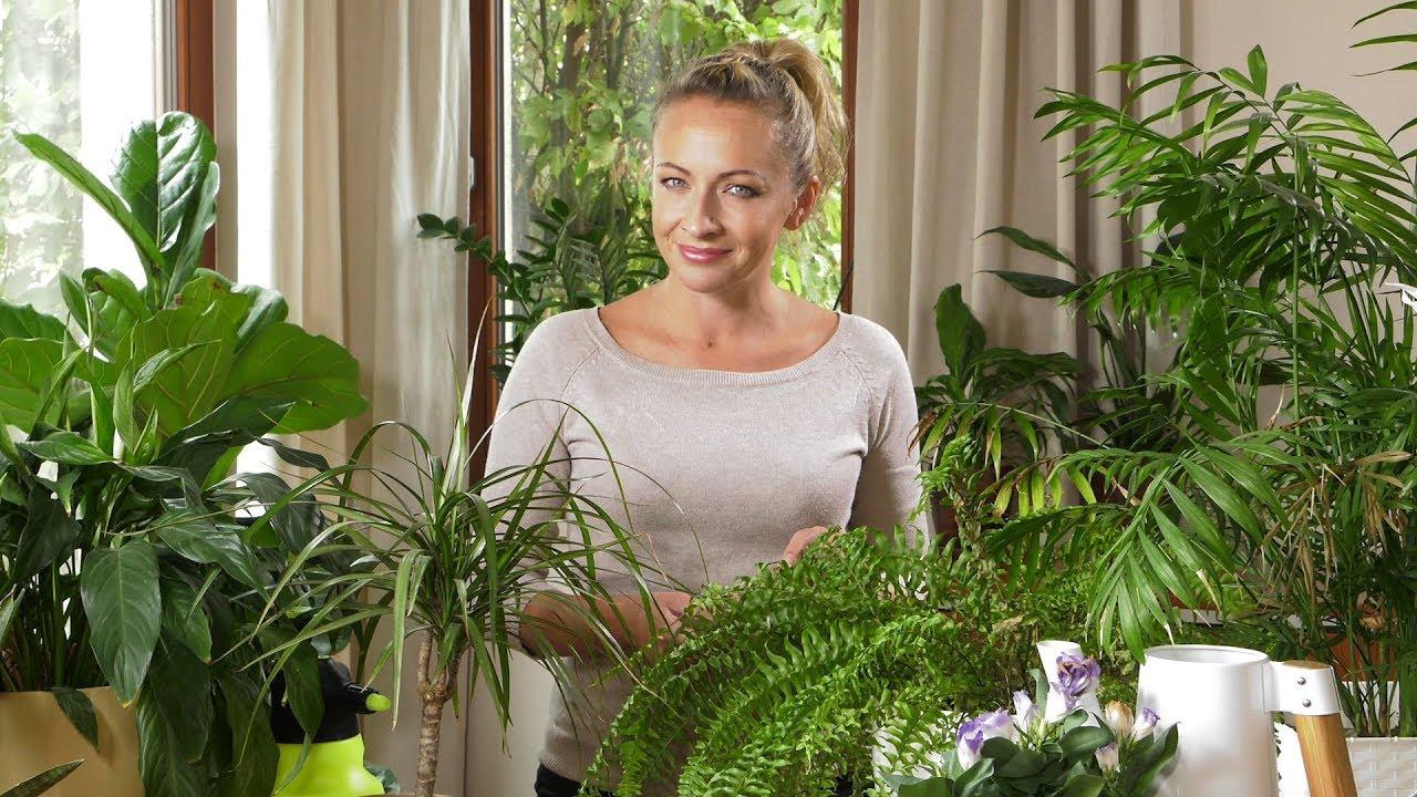 Domowe rośliny po urlopie
