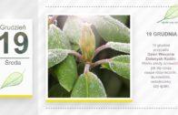 Kalendarz ogrodnika na 17.12 – 23.12 – grudzień w ogrodzie