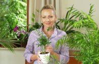 Jak dobrać doniczki do roślin domowych?
