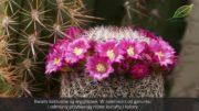 Kaktusy – całoroczna uprawa