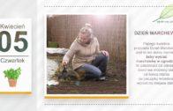 Kalendarz ogrodnika na 02.04 – 08.04 – kwiecień w ogrodzie