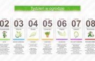 Kalendarz ogrodnika na 02.07 – 08.07- lipiec w ogrodzie