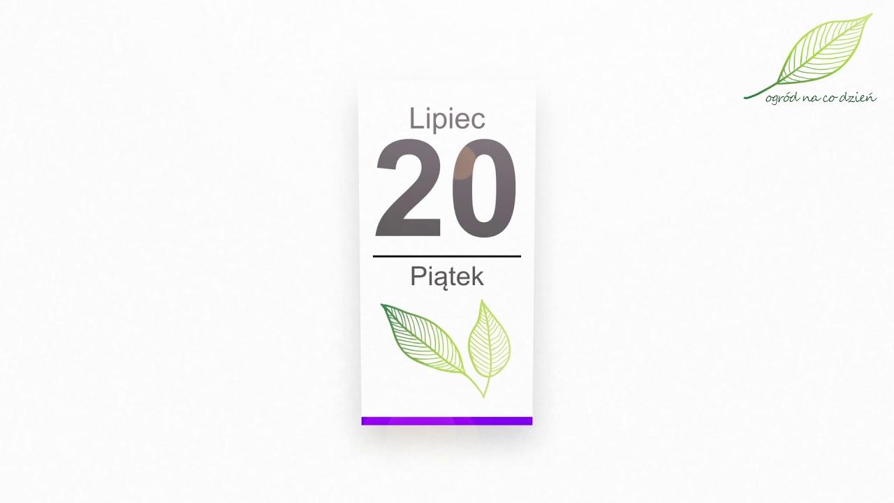 Kalendarz ogrodnika na 16.07 – 22.07 – lipiec w ogrodzie
