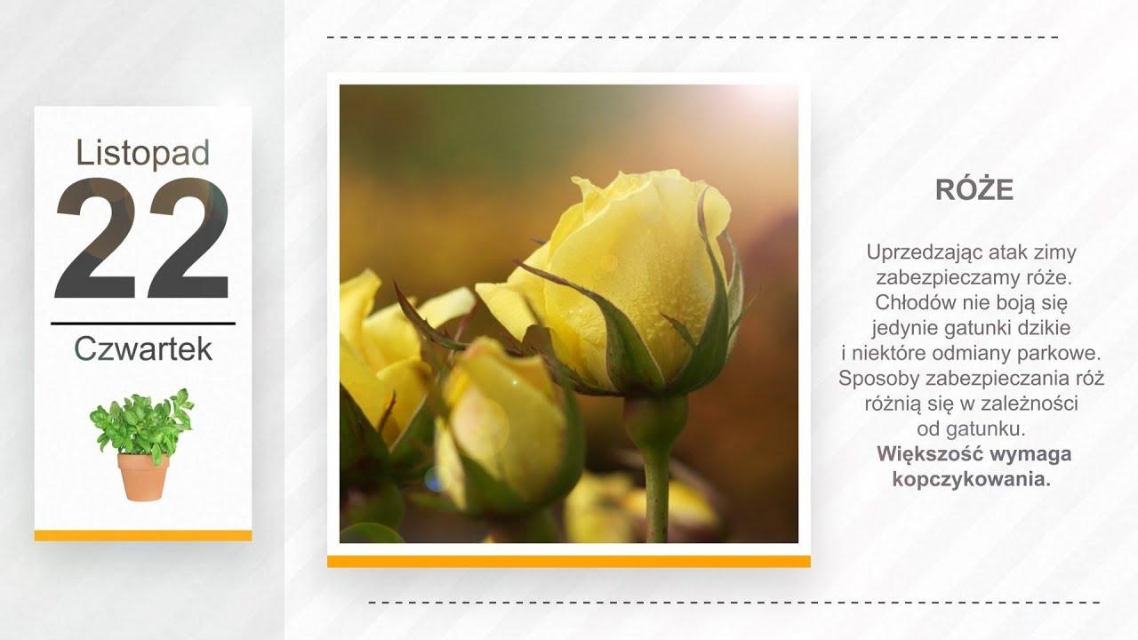 Kalendarz ogrodnika na 19.11 – 25.11 – listopad w ogrodzie