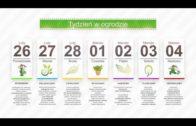 Kalendarz ogrodnika na 26.02 – 04.03 – marzec w ogrodzie