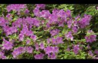 Kalendarz ogrodnika na 14.05 – 20.05 – maj w ogrodzie