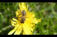 Kalendarz ogrodnika na 21.05 – 27.05 – maj w ogrodzie