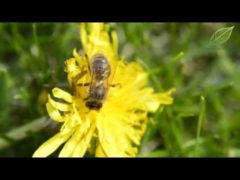 kalendarz ogrodnika, kalendarz ogrodniczy, tydzień w ogrodzie porady ogrodnicze, ogród, maj w ogrodzie, majowe prace ogrodnicze, co wysiać w maju, majowe wysiew, siew w maju