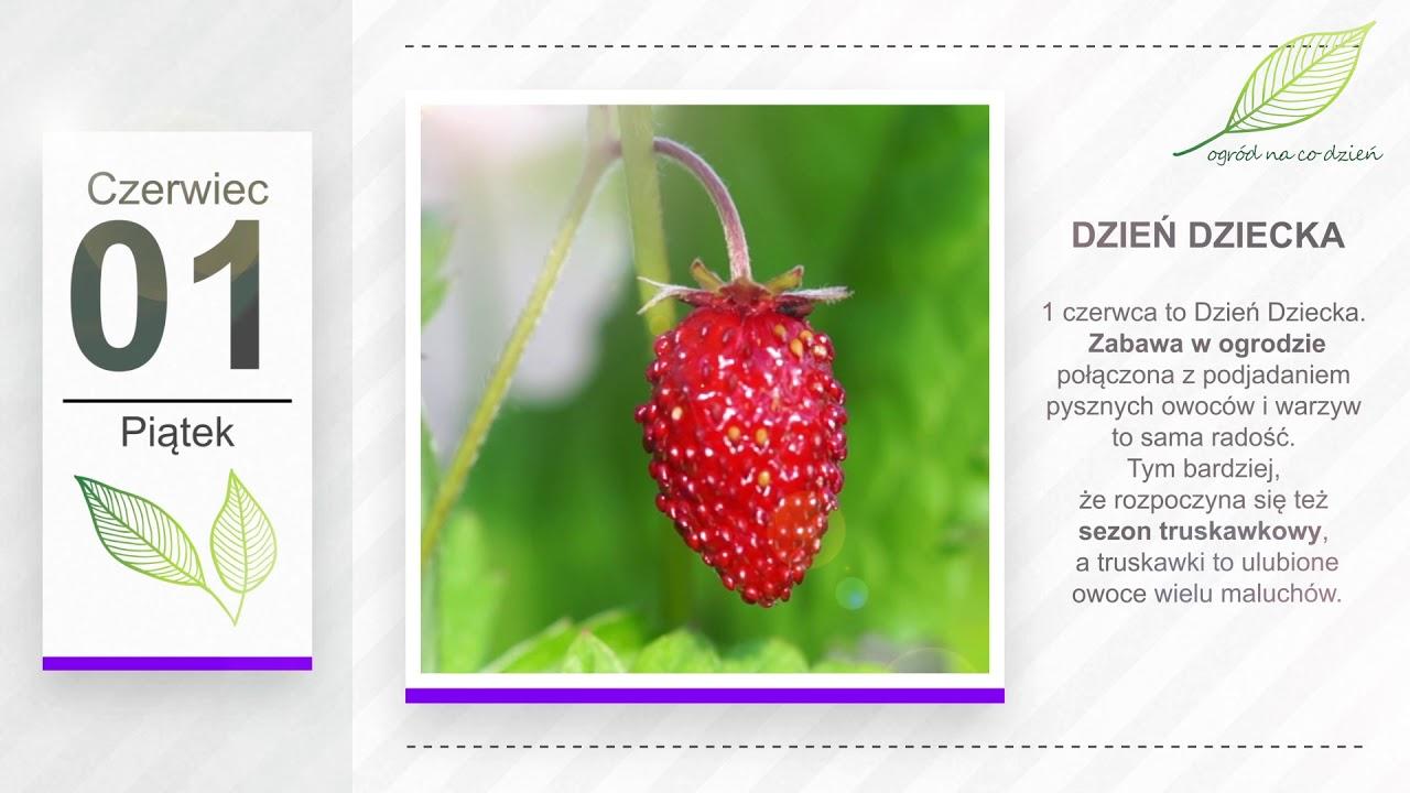 Kalendarz ogrodnika na 28.05 – 03.06 – maj w ogrodzie