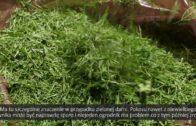 Mulczowanie trawnika i kompostowanie