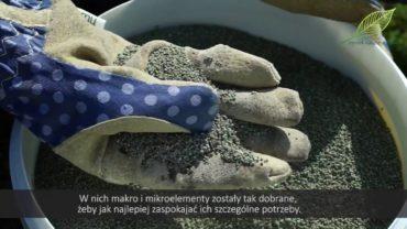 Nawożenie – Jak nawozić rośliny – jak optymalnie odżywiać rośliny