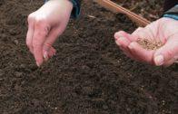 Ogród warzywny w marcu – wysiew rzodkiewki, szpinaku, grochu i bobu.