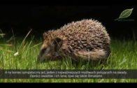 Ogrodowi sojusznicy – naturalni wrogowie szkodników