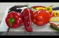 Papryka i bakłażan – uprawa i wysiew papryki