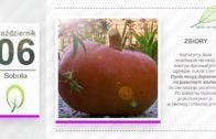 Kalendarz ogrodnika na 01.10 – 06.10 – październik w ogrodzie