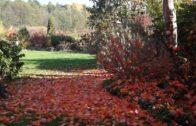 Kalendarz ogrodnika na 15.10 – 21.10 – październik w ogrodzie