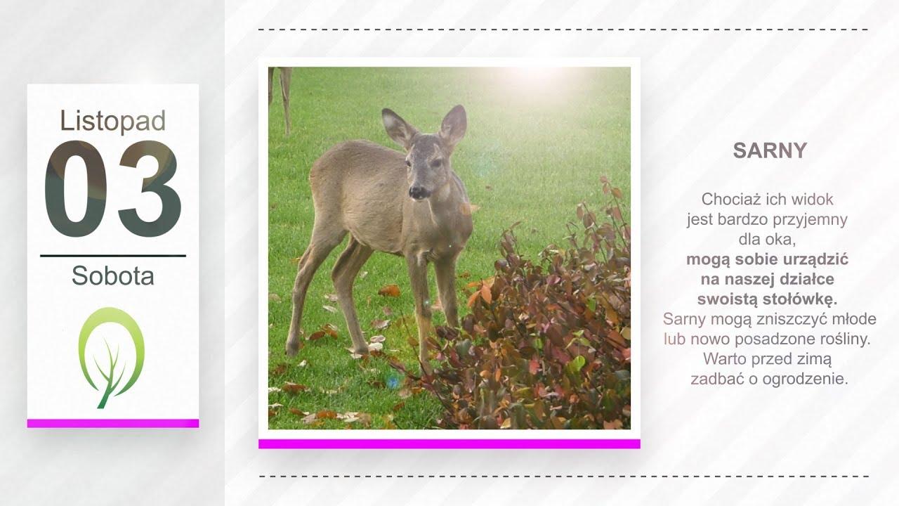 Kalendarz ogrodnika na 29.10 – 04.11 – październik w ogrodzie