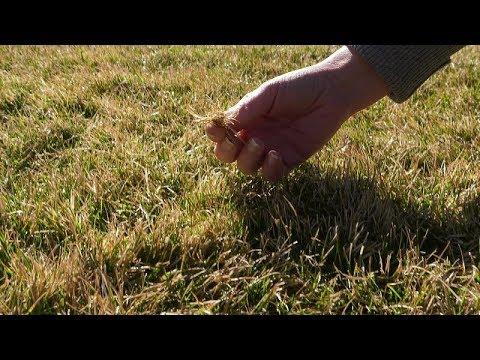 problemy z trawnikiem, trawnik po zimie, pleśń śniegowa, chory trawnik, suchy trawnik po zimie, dobry start trawnika, pielęgnacja trawnika,