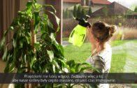 Rośliny doniczkowe – problemy ze szkodnikami na liściach, choroby roślin doniczkowych