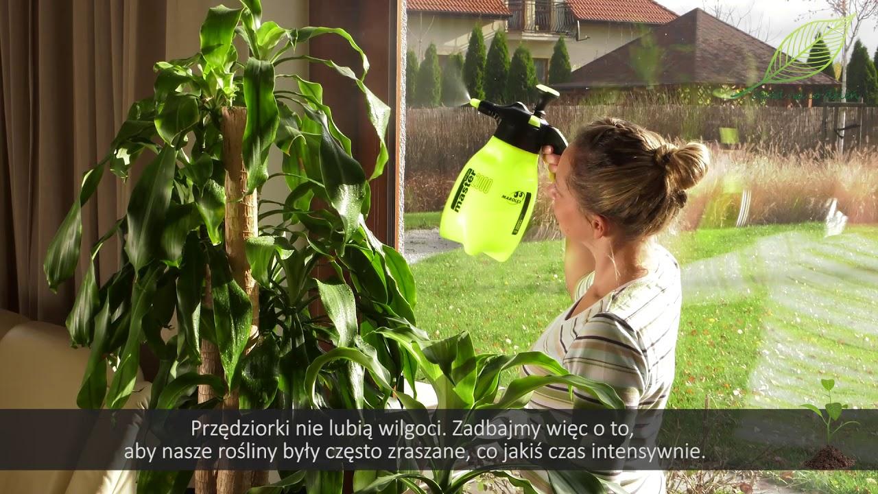 Rośliny doniczkowe choroby i szkodniki