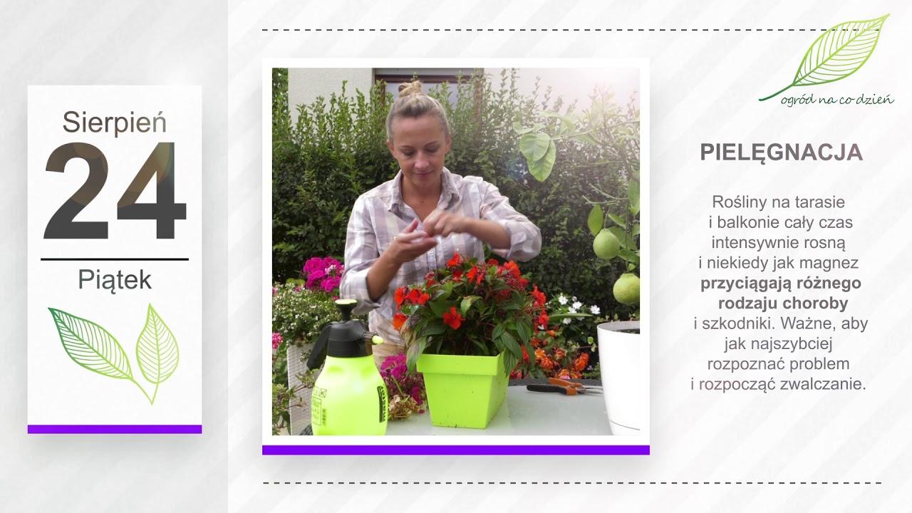 Kalendarz ogrodnika na 20.08 – 26.08 – sierpień w ogrodzie