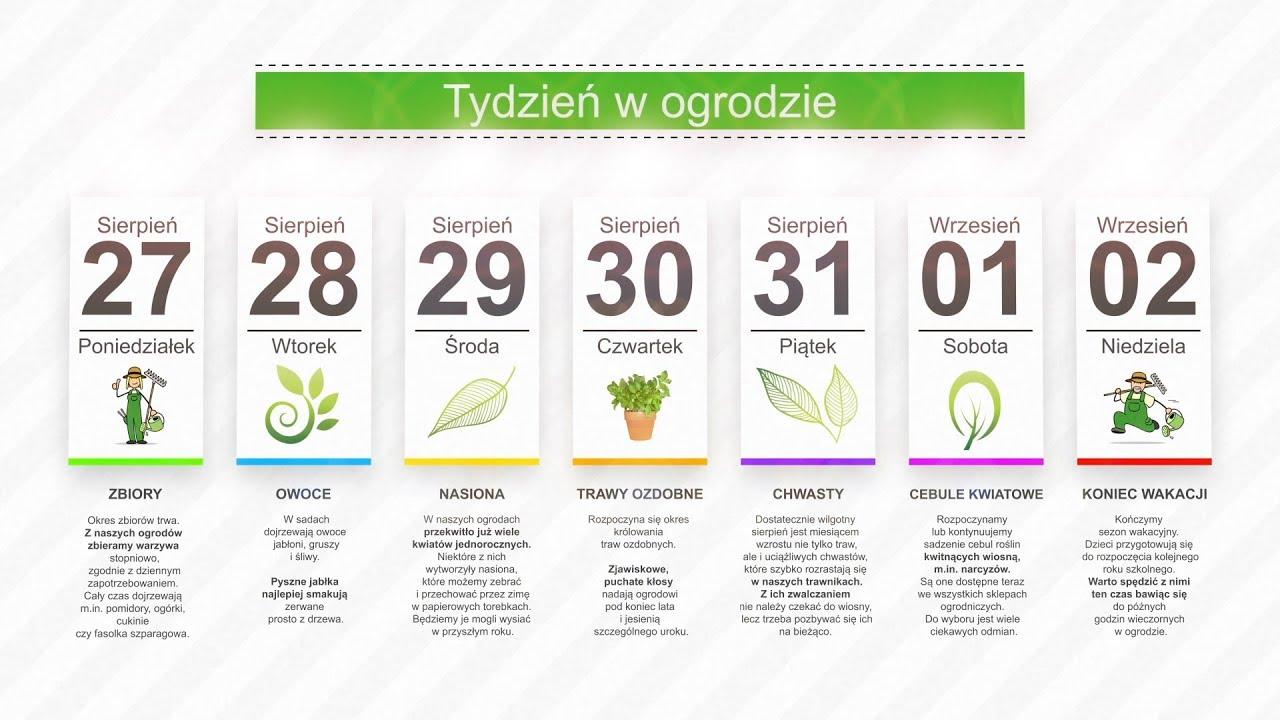 Kalendarz ogrodnika na 27.08 – 02.09 – lipiec w ogrodzie