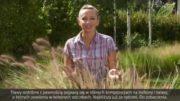 Trawy ozdobne – odmiany i kompozycje