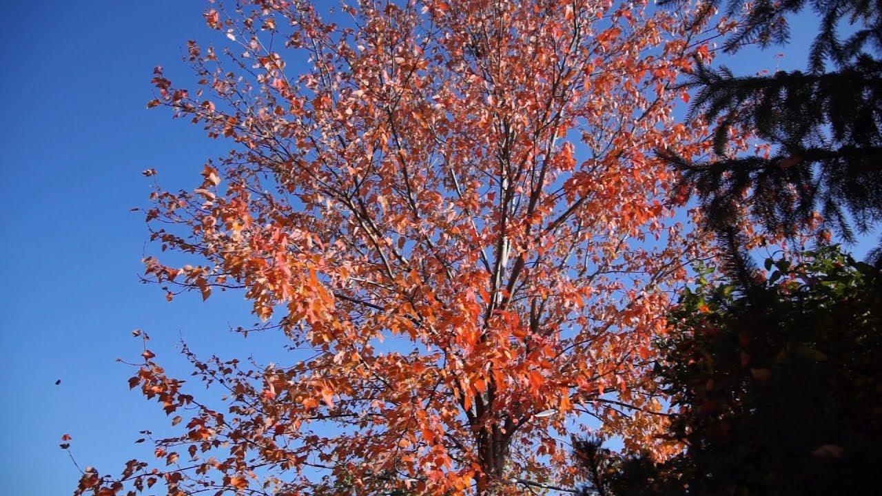 Kalendarz ogrodnika na 24.09 – 30.09 – wrzesień w ogrodzie