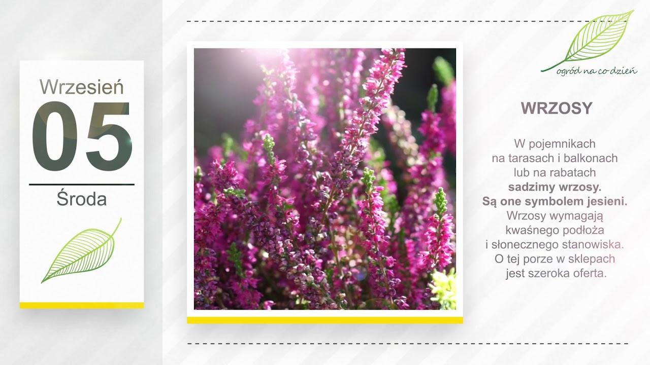 Kalendarz ogrodnika na 03.09 – 09.09 – wrzesień w ogrodzie