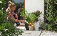 Czy wystawiać domowe rośliny na balkon lub taras?