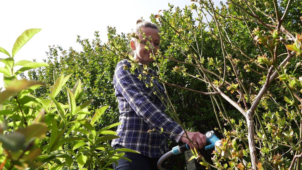 kalendarz ogrodnika, maj w ogrodzie, tydzień w ogrodzie, rok w ogrodzie, prace ogrodnicze w maju,