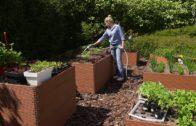 Maj w ogrodzie – kalendarz ogrodnika na 13.05 – 19.05