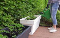 Kalendarz ogrodnika na 27.05 – 05.06 – maj w ogrodzie