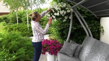 Kalendarz ogrodnika na 17.06 – 23.06 – czerwiec w ogrodzie