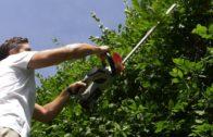 Kalendarz ogrodnika na 24.06 – 30.06 – czerwiec w ogrodzie