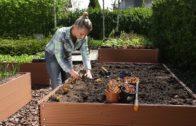 Rozsady pomidorów – ogród warzywny
